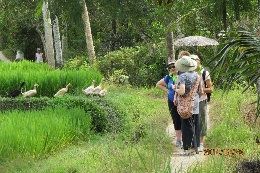 Guided rice paddy walk.